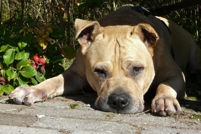 Женщина потеряла собаку, а через 3 года увидела её фото на банке пива!