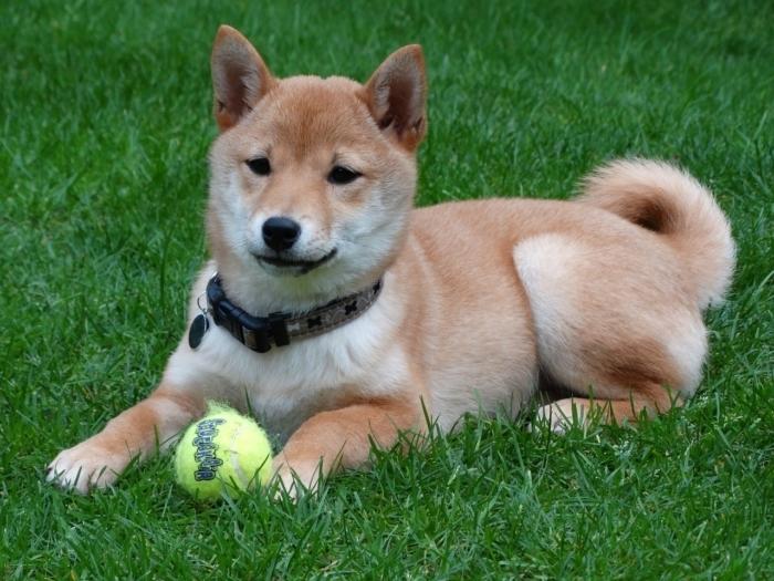 (Видео) Ролик про возмущённого пса и его непримиримого оппонента стал хитом!