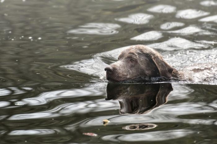 Бродячая собака провалилась под тонкий лёд. А очевидец не раздумывая разделся и нырнул в воду!