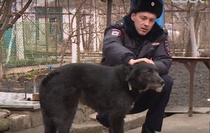 (Видео) Охотник расстрелял бездомную собаку. Спасли животное и собрали деньги на лечение полицейские