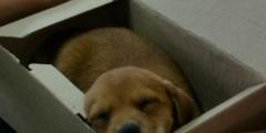 Ухоженного щенка бросили в коробке у приюта. Но из-за записки от бывшего хозяина он недолго будет одинок!
