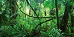 (Видео) Учитель тащил 40-килограммовый холодильник через джунгли на спине! Ради 9 учеников