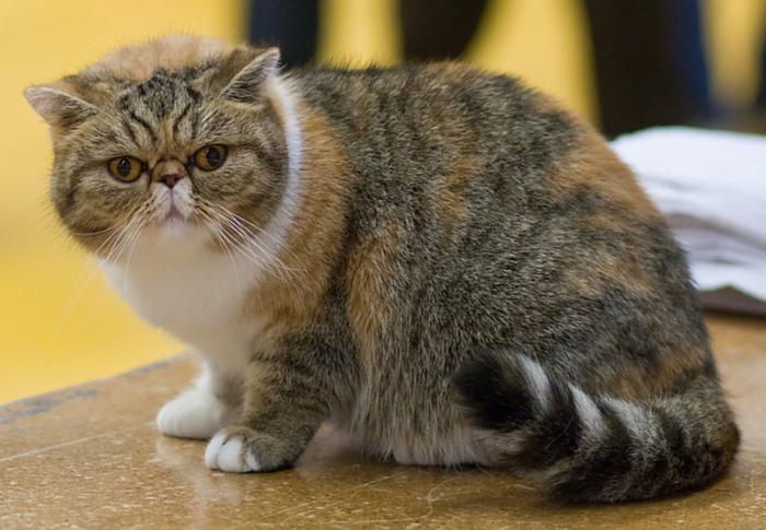 Почти 30 породистых и дорогих кошек с котятами нашли в лесу жители Подмосковья