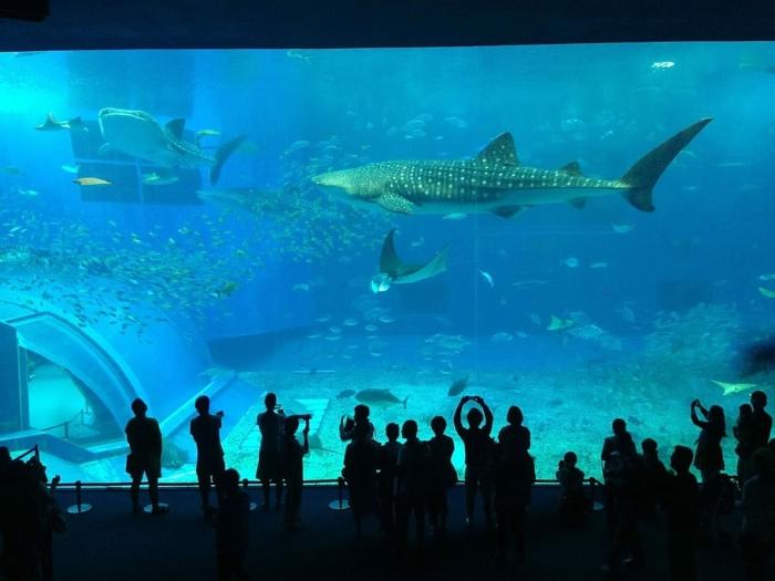 (Видео) Океанариум закрыли из-за коронавируса. Но сотрудники нашли, кому дать погулять по опустевшим залам