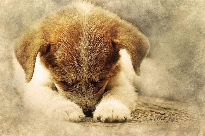 Крошечного пёсика хотели усыпить из-за того, что он «слишком стар»
