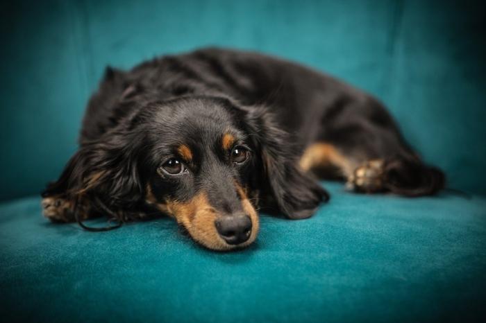 Первая собака с коронавирусом COVID-19 обнаружена в Гонконге