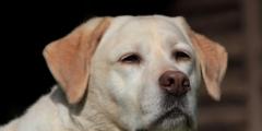 Слепую 10-летнюю собаку отдали в приют. Казалось, что на новую семью у неё нет шансов