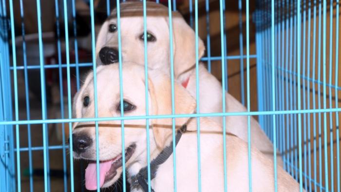 Волонтёрам запретили посещать приюты для животных из-за карантина. Директор фонда объяснила, чем это грозит