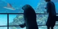 (Видео) Морской лев стал посетителем океанариума. Хоть кто-то счастлив во время пандемии!
