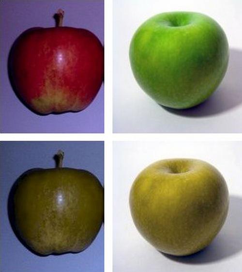 нормальное видение красного и зелёного яблок и восприятие этих цветов дальтониками