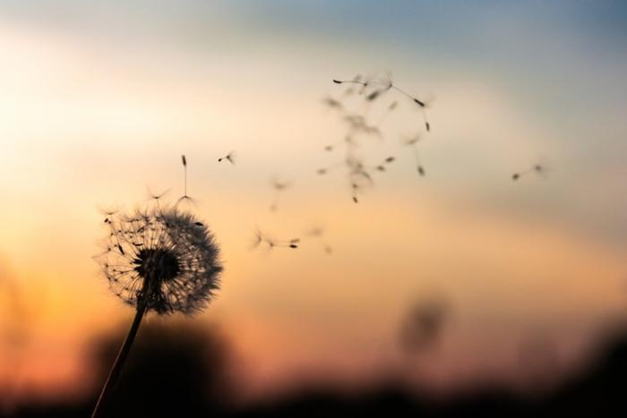 Зачем мальчик попросил у святого в награду ветер? Древняя легенда об особенном ребёнке