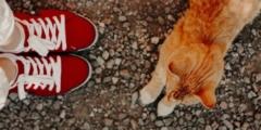 Изменить жизнь бездомному наркоману помог кот. Бездомный рыжий кот