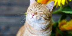 Отличная идея в условиях карантина! Приложение для общения с животными от фонда «РЭЙ»