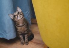 (Видео) Кот ободрал обои, но хозяйка не стала его ругать. Потому что от увиденной картины у неё захватило дух