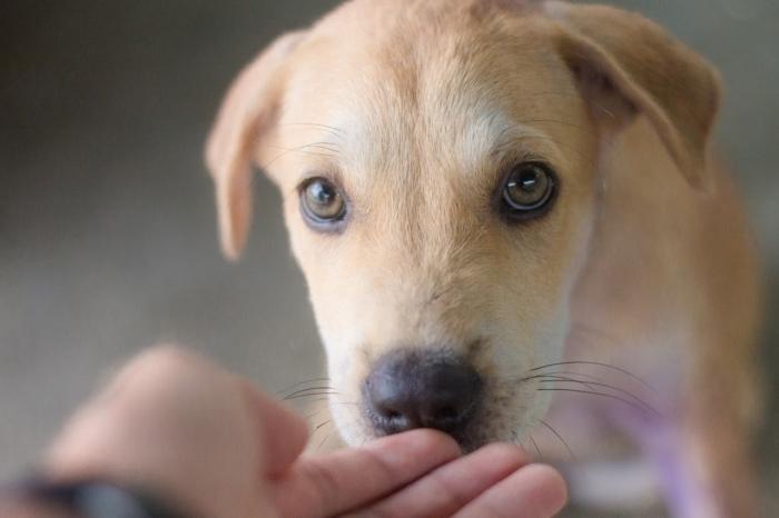 За полтора месяца измождённое создание превратилось в жизнерадостного щенка. Любовь творит чудеса!