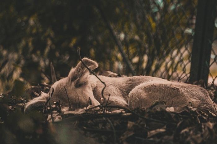 Пса, напоминающего «доисторическое существо», приютили и вылечили. Как же он благодарен!
