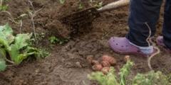 Фермерша поняла, что должна сделать со своим урожаем, когда опустели полки магазинов