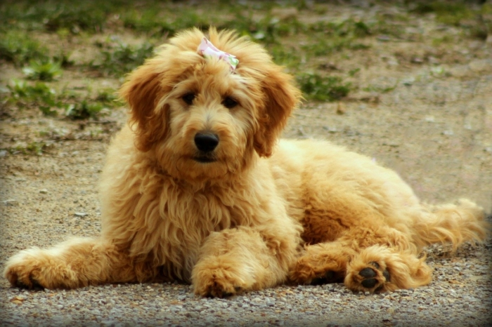 Водитель заметил на оживлённом шоссе собаку. Под ошейником у неё была записка, которая разбила ему сердце
