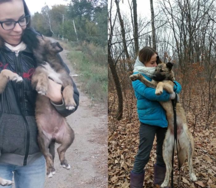 Двух щенков оставили на обочине дороги. Они ждали тех, кто не проедет мимо