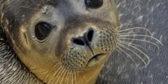 (Видео) Морской лев пришёл к мужчине в гости. Но тот был не готов