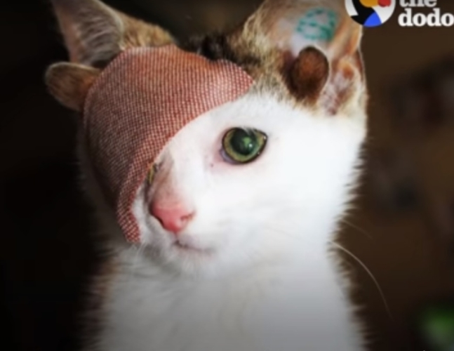 Бездомный одноглазый котёнок с четырьмя ушами нашёл любящих хозяев и покорил соцсети