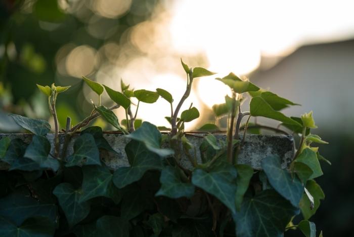 Мужчина устал от жаркого солнца и решил «спрятать многоквартирный дом» под зелёным покровом. И теперь это настоящая достопримечательность!