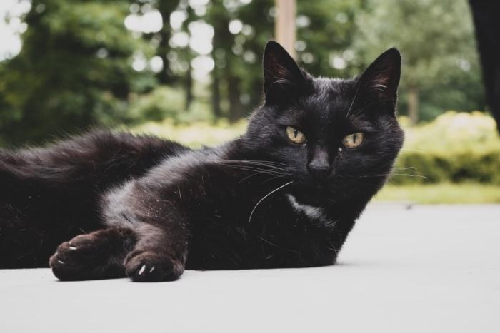 Хозяева оплакивали пропавшего кота и не знали, что он жив. Подвёл хвостатого закрывшийся на карантин магазин