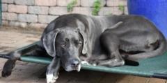 Брошенный пёс три года ждёт своего хозяина у многоквартирного дома. Он произвёл неожиданный эффект на жильцов