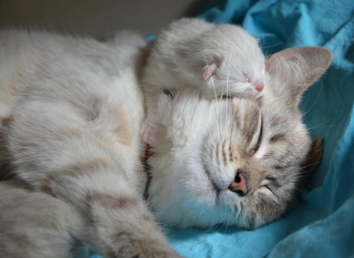 (Видео) Кошка лишилась единственного котёнка и была безутешна. Но хозяйка нашла выход, проявив немного смекалки