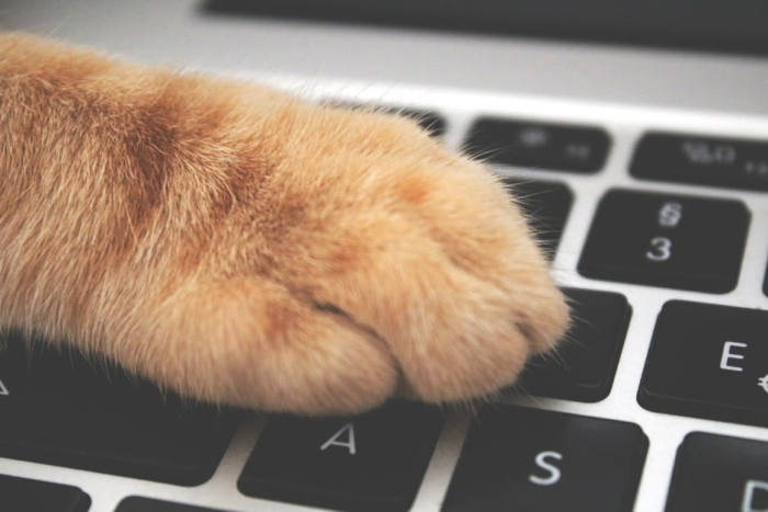 (Видео) Трюк японца просто спас любителей кошек, работающих теперь дома!