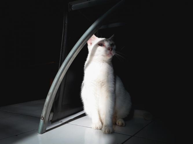 Кошка с редким генетическим заболеванием: каждый её глаз двухцветный!