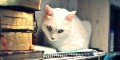 Девочка долго искала кота, который бы не боялся её инвалидной коляски. Им оказался недоверчивый бездомный кот!