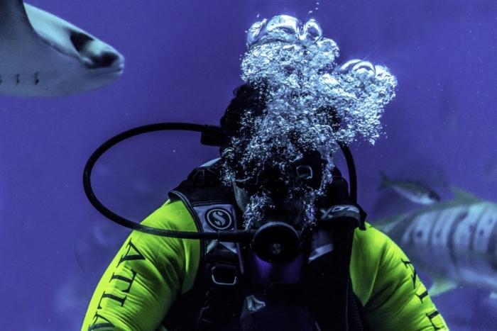 (Видео) 30 лет назад водолаз спас хищную рыбу. С тех пор у них нежная дружба с обязательным поцелуем при встрече!