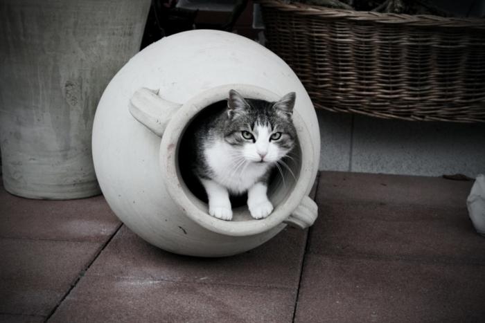(Видео) Шарообразная кошка покорила пользователей. Но она не толстая, она болеет