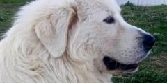 Много раз люди отказывались от слепого и глухого пса. Но он ждал!