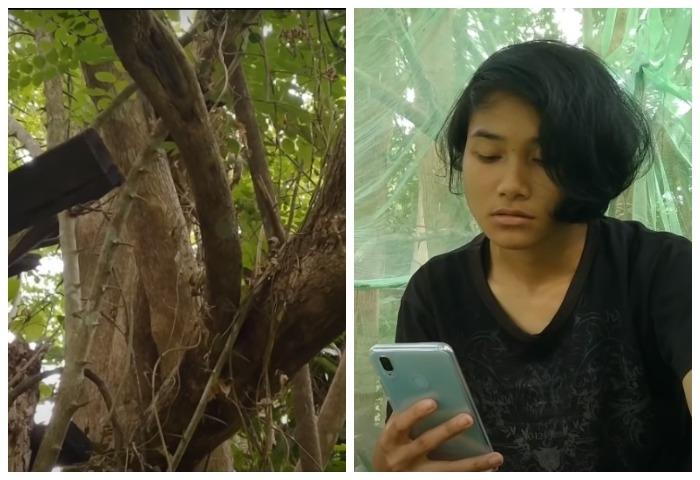 (Видео) Девушка сутки провела на дереве ради хорошего интернета. И во всём виноваты экзамены!