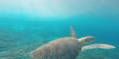 Черепаха много лет помнила добрый поступок и в нужный час пришла на помощь