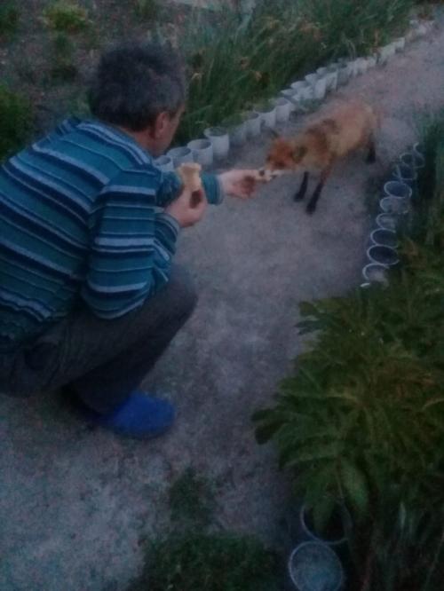 Один за другим приходили к пенсионерке на дачу гости из леса. Некоторых даже пришлось кормить!