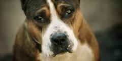 Верный пёс охранял застреленного на улице хозяина до приезда полиции