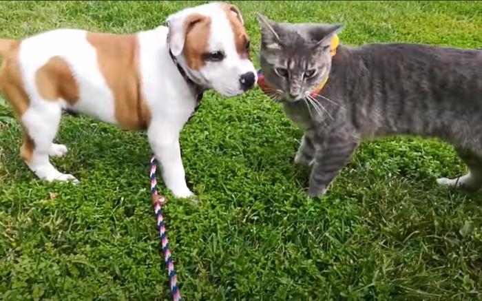 (Видео) В питомнике щенок и кошка стали неразлучными друзьями. Но пришла пора расставаться