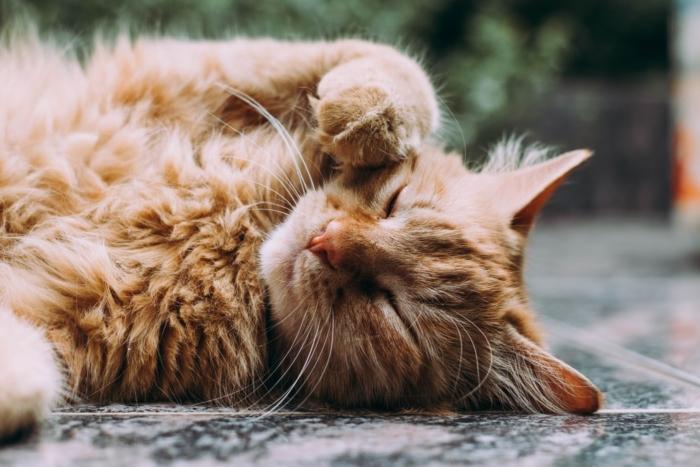 Животные: жизнь после смерти