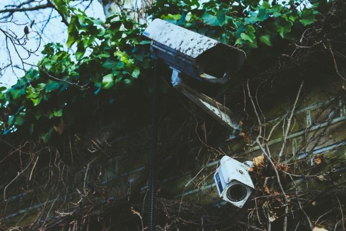 (Видео) Камера в саду сняла, как уживаются лиса и ёж. В дикой природе всё неоднозначно!