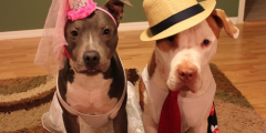 (Видео) Девушка записала реакцию собак на свой рассказ. Оказалось, они всё понимают!