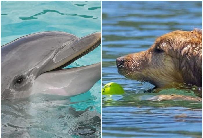 Собака и дельфин дружат 8 лет. Фото дружеского поцелуя восхитило пользователей