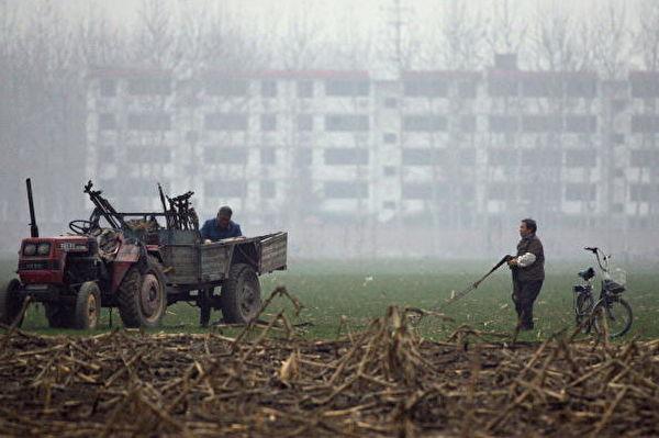 Фермеры работают в поле на фоне застроек окраины Пекина, 22 ноября 2007 года