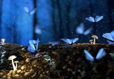 Внезапная остановка сердца привела женщину в волшебный лес. А врачи 4 дня боролись за жизнь и не знали, чем всё закончится