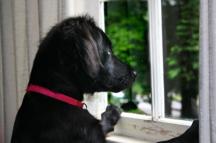 Хозяйка не понимала, почему пёс ходит подавленный. Разгадка была за окном