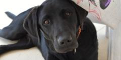 Собака, похожая на кенгуру, погибла бы на улицах, если бы не волонтёры!