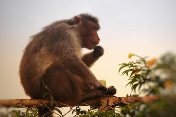 Что случилось с обезьяной, которая преподнесла Будде мёд?
