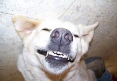 (Фото) Улыбающаяся собака стала блогером. У неё 87 тысяч подписчиков в соцсетях